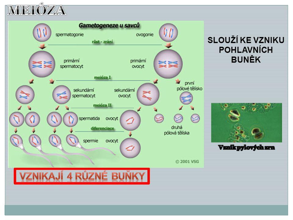 Závěr: 1)Co je chromozóm.Kde se nachází. 2)Jakými dvěma způsoby se můžou buňky dělit.