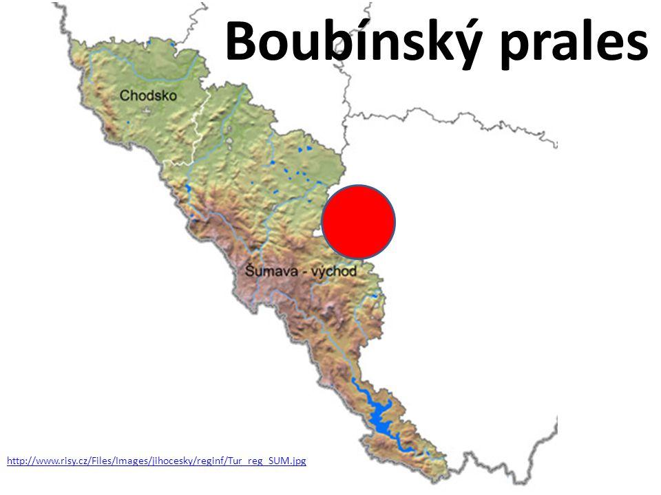 http://www.risy.cz/Files/Images/jihocesky/reginf/Tur_reg_SUM.jpg Boubínský prales