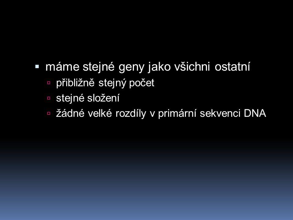  máme stejné geny jako všichni ostatní  přibližně stejný počet  stejné složení  žádné velké rozdíly v primární sekvenci DNA