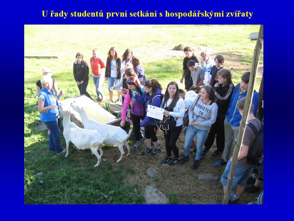 U řady studentů první setkání s hospodářskými zvířaty