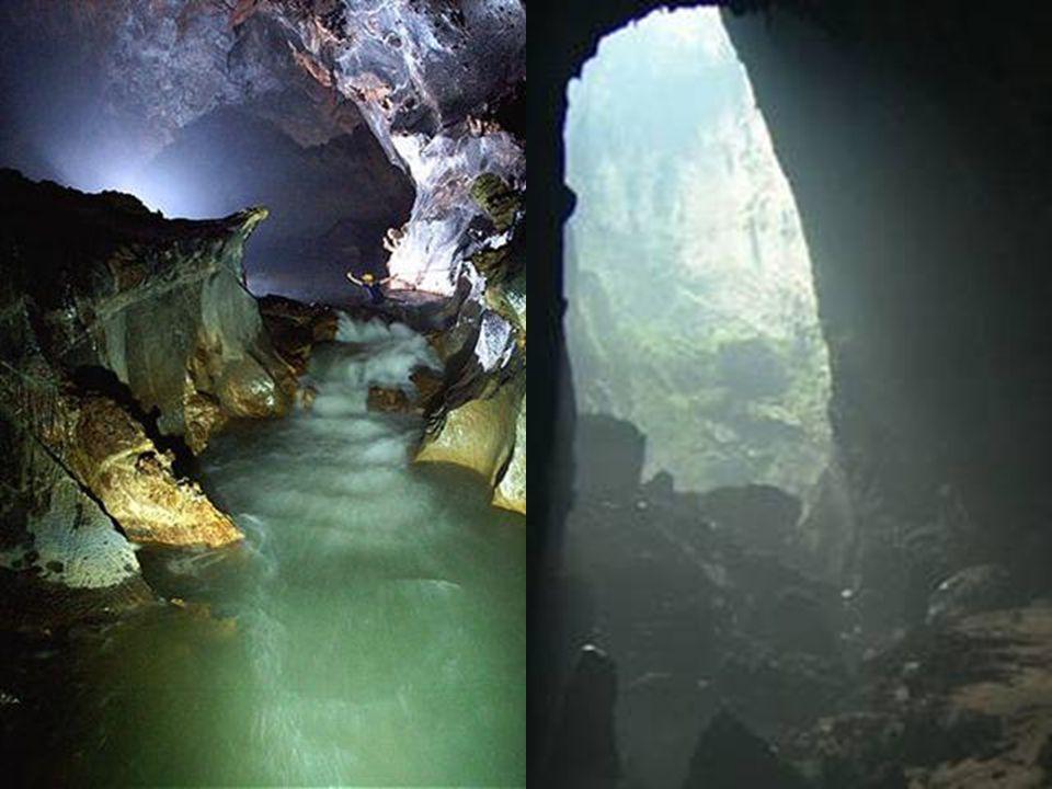 Po zhroucení stropu jeskyně se dovnitř dostalo denní světlo a umožnilo vytvářet nové unikátní ekosystémy.