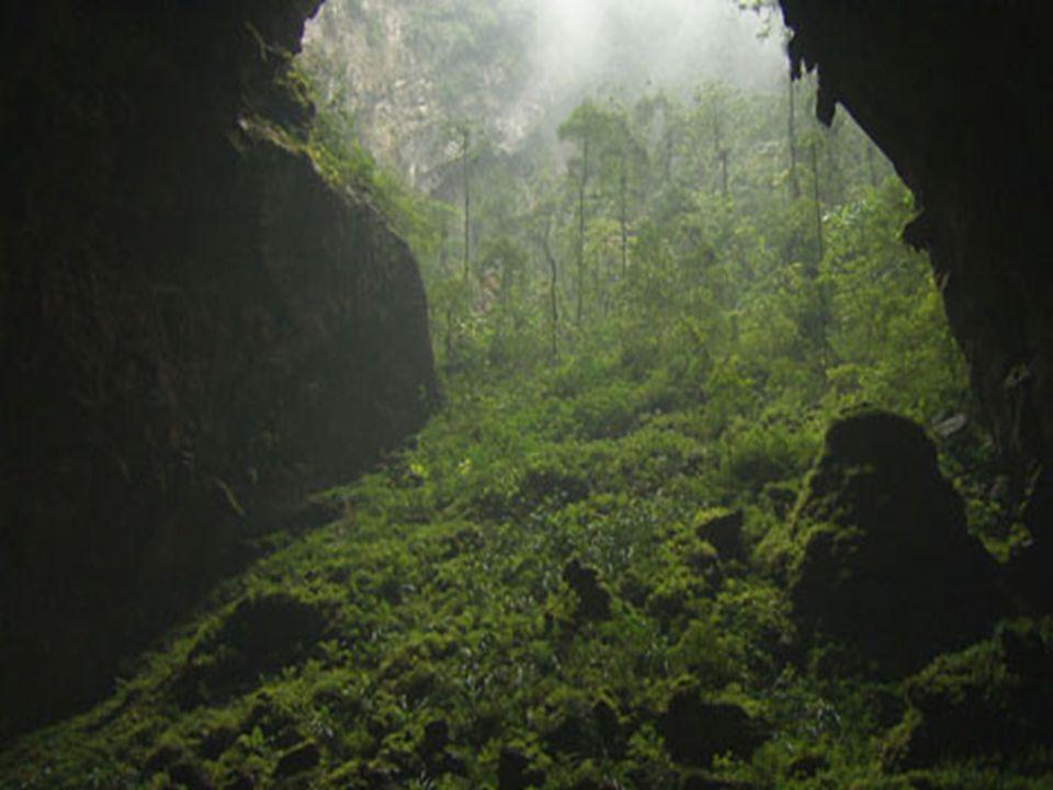 .. Tento obrovský růst vegetace je způsoben tropickými deštnými strouhami …