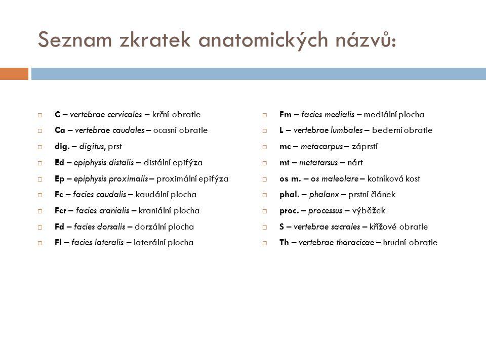 Seznam zkratek anatomických názvů:  C – vertebrae cervicales – krční obratle  Ca – vertebrae caudales – ocasní obratle  dig. – digitus, prst  Ed –