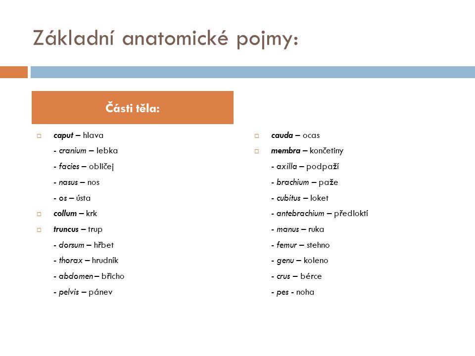 Základní anatomické pojmy:  caput – hlava - cranium – lebka - facies – obličej - nasus – nos - os – ústa  collum – krk  truncus – trup - dorsum – h