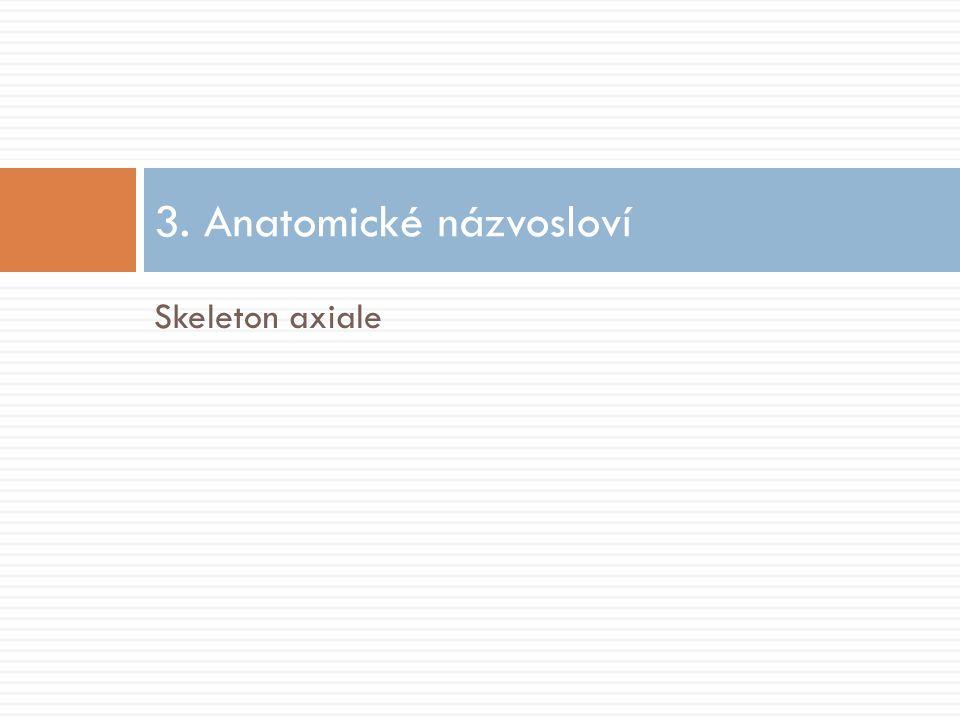 Skeleton axiale 3. Anatomické názvosloví