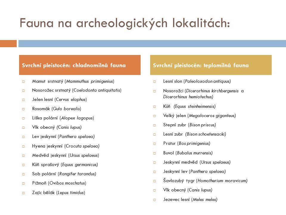 Fauna na archeologických lokalitách:  Mamut srstnatý (Mammuthus primigenius)  Nosorožec srstnatý (Coelodonta antiquitatis)  Jelen lesní (Cervus ela