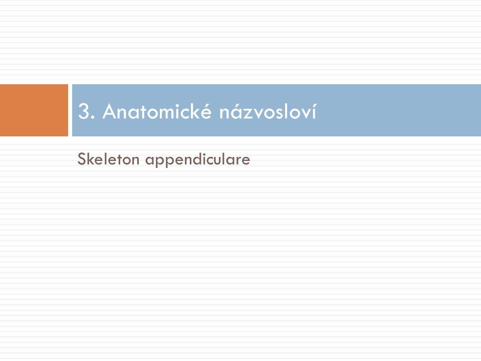 3. Anatomické názvosloví Skeleton appendiculare