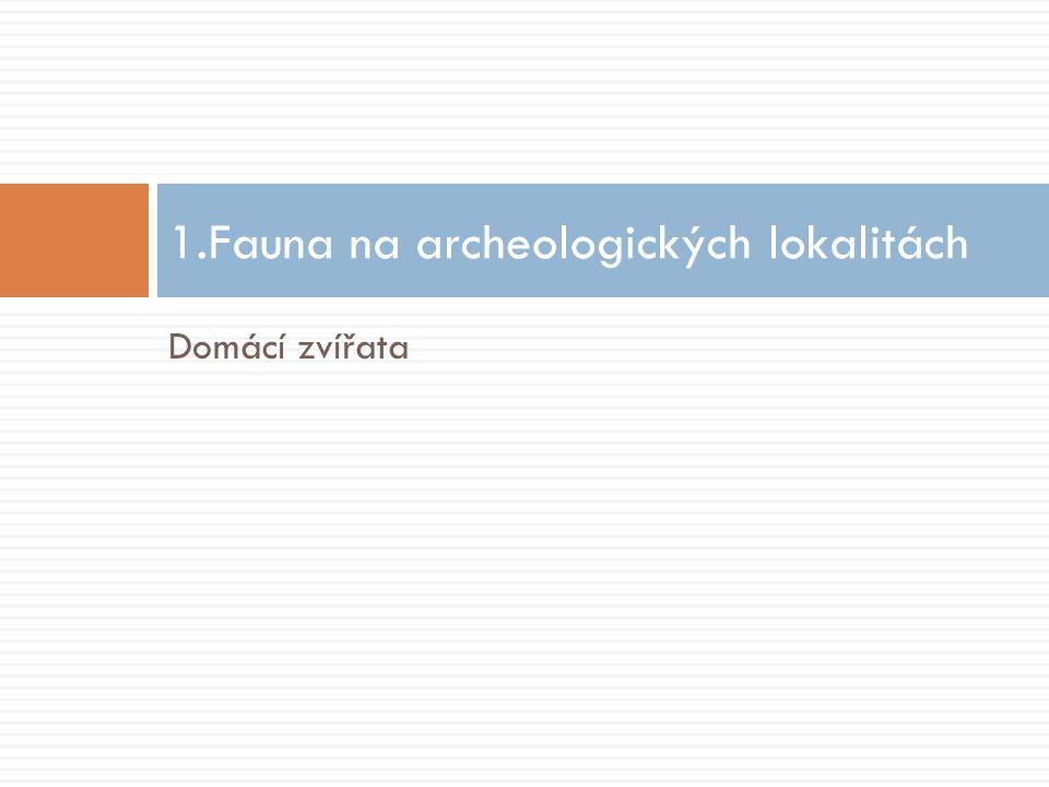 Domácí zvířata 1.Fauna na archeologických lokalitách