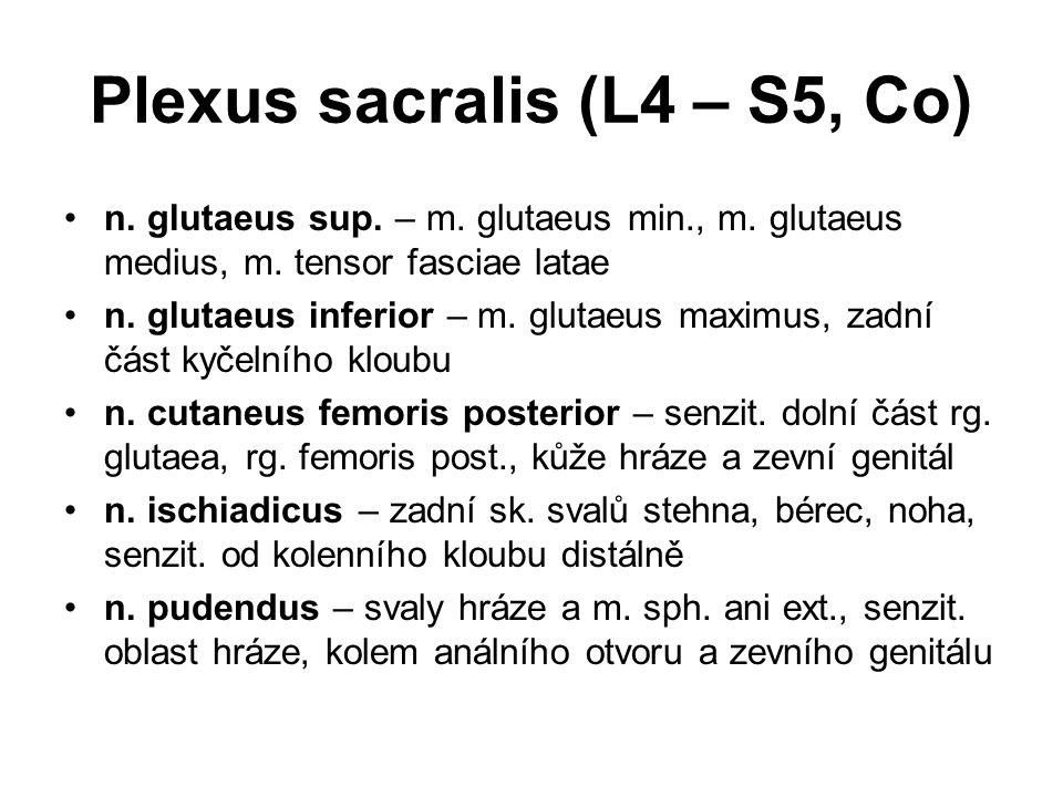 n. glutaeus sup. – m. glutaeus min., m. glutaeus medius, m. tensor fasciae latae n. glutaeus inferior – m. glutaeus maximus, zadní část kyčelního klou