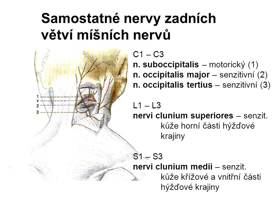 C1 – C3 n. suboccipitalis – motorický (1) n. occipitalis major – senzitivní (2) n. occipitalis tertius – senzitivní (3) L1 – L3 nervi clunium superior