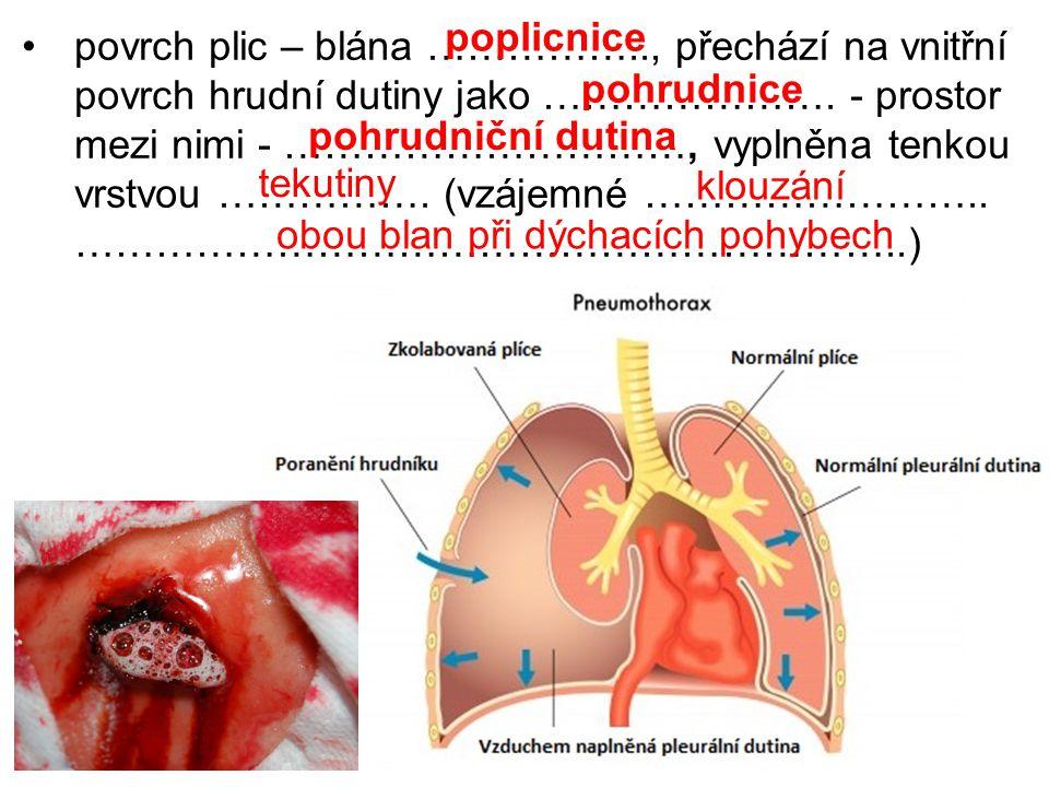 povrch plic – blána …………….., přechází na vnitřní povrch hrudní dutiny jako ………………….
