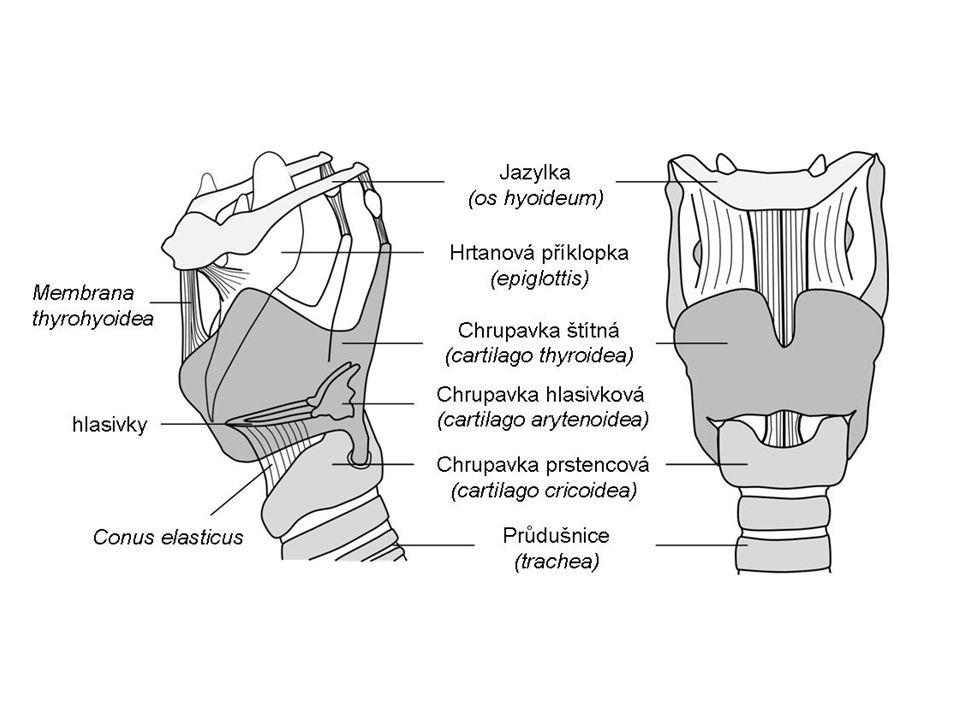 Průdušnice trubice tvořená ……………………..uložena v těle ………………...