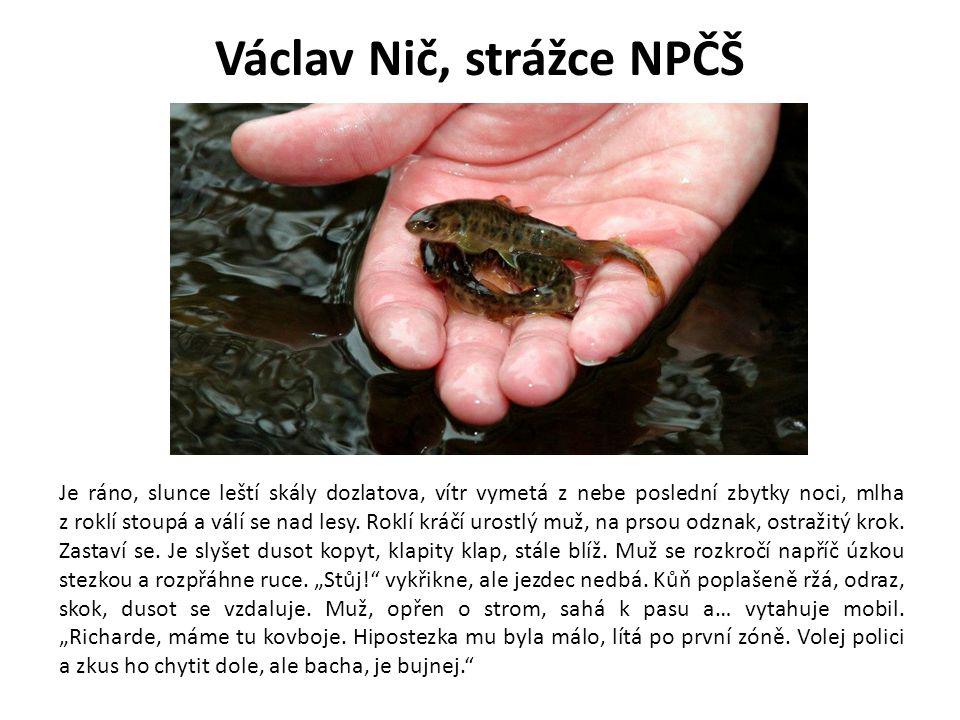 Václav Nič, strážce NPČŠ Je ráno, slunce leští skály dozlatova, vítr vymetá z nebe poslední zbytky noci, mlha z roklí stoupá a válí se nad lesy. Roklí