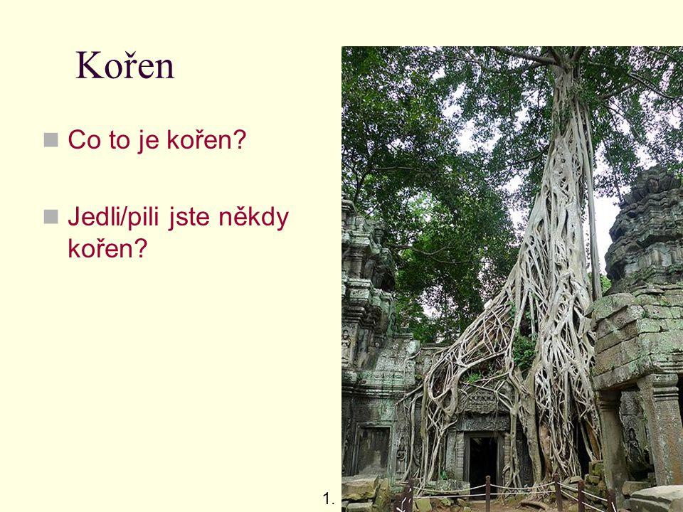 Úkol – řez kořenem Proveďte řez kořenem rostliny (tradeskancie, břečťan, monstera apod.), příčný i podélný.