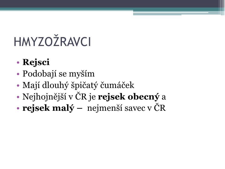 HMYZOŽRAVCI - rejsek