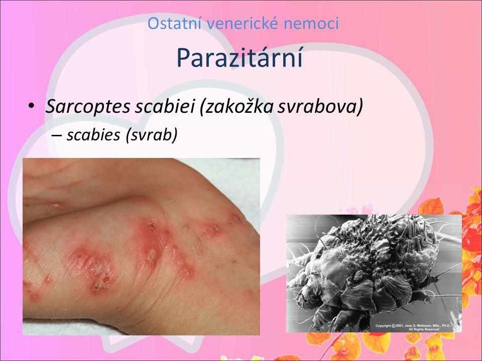 Ostatní venerické nemoci Sarcoptes scabiei (zakožka svrabova) – scabies (svrab) Parazitární