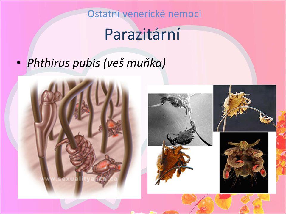 Ostatní venerické nemoci Phthirus pubis (veš muňka) Parazitární