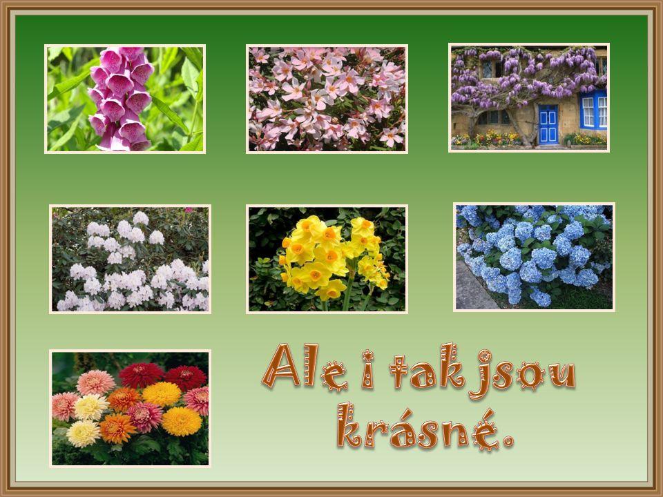 Nejméně nebezpečnou rostlinou je chryzantéma (Chrysanthemum). Chryzantémy jsou velmi oblíbené, protože jako jedny z mála rostlin kvetou na podzim, kdy