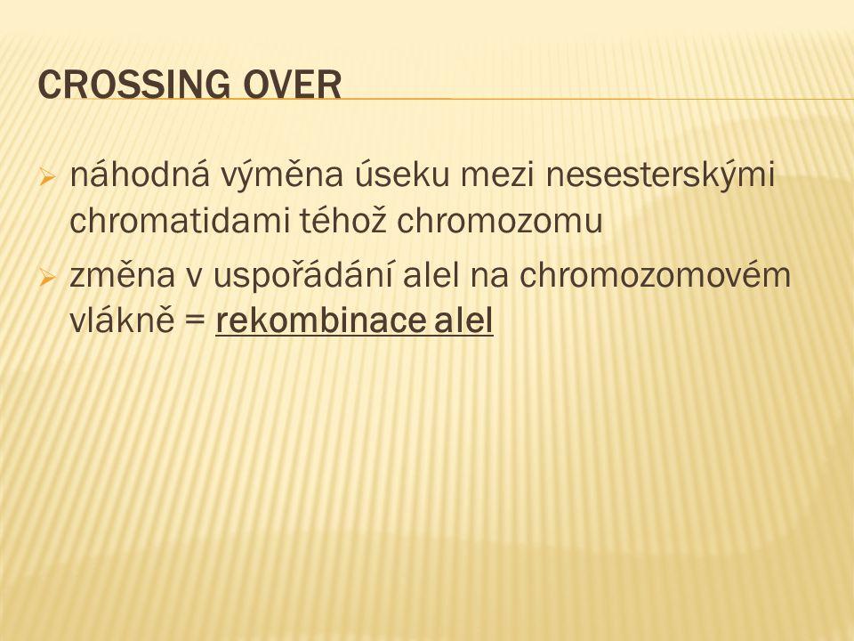 CROSSING OVER  náhodná výměna úseku mezi nesesterskými chromatidami téhož chromozomu  změna v uspořádání alel na chromozomovém vlákně = rekombinace