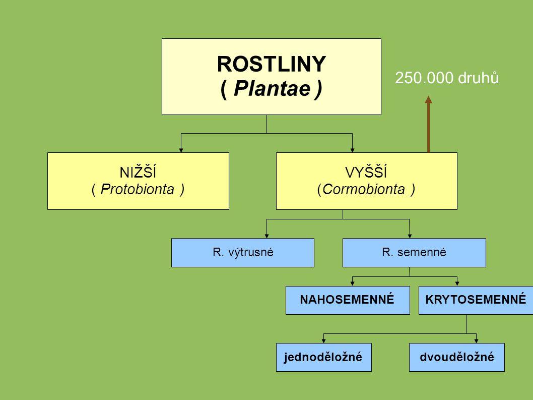 Systematika rostlin = popisy a třídění rostlin do určitých kategorií podle společných znaků