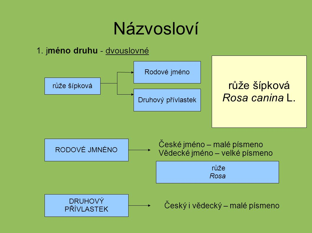 2.Ostatní – české malé - vědecké ( latinské ) - velké – rod 1.