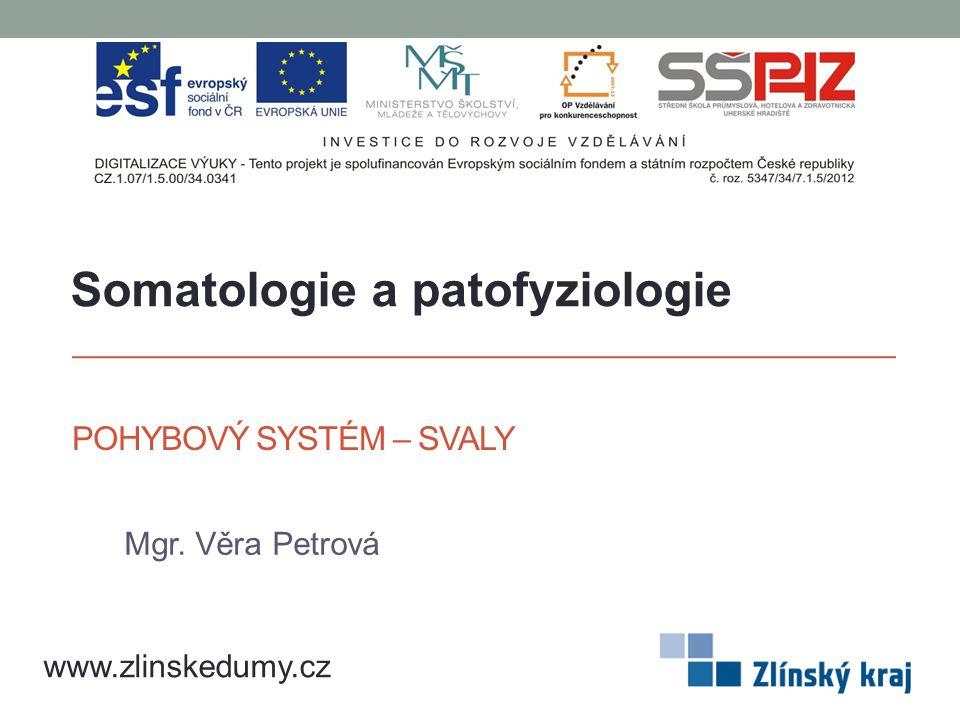 POHYBOVÝ SYSTÉM – SVALY Mgr. Věra Petrová www.zlinskedumy.cz Somatologie a patofyziologie
