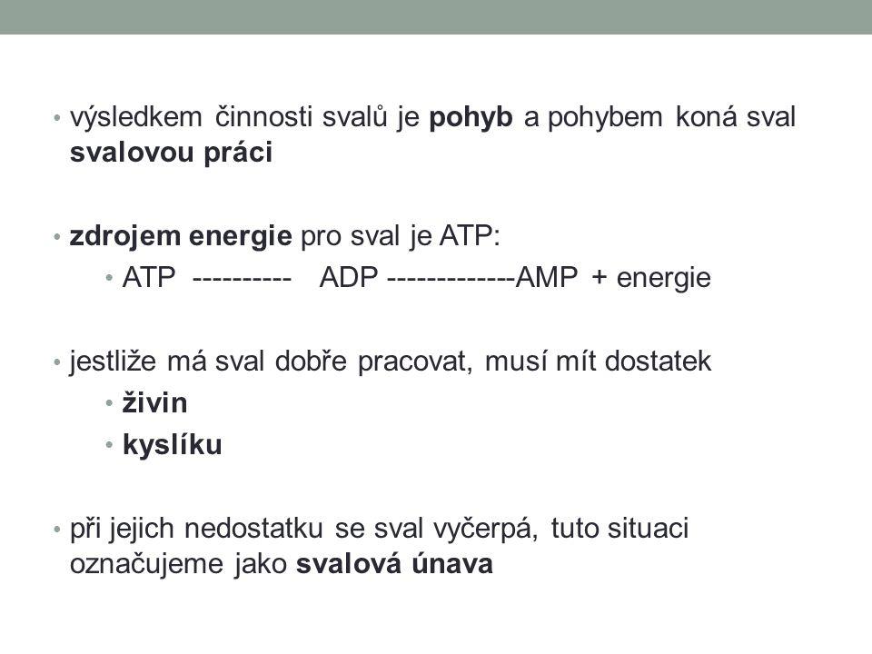 výsledkem činnosti svalů je pohyb a pohybem koná sval svalovou práci zdrojem energie pro sval je ATP: ATP ---------- ADP -------------AMP + energie je