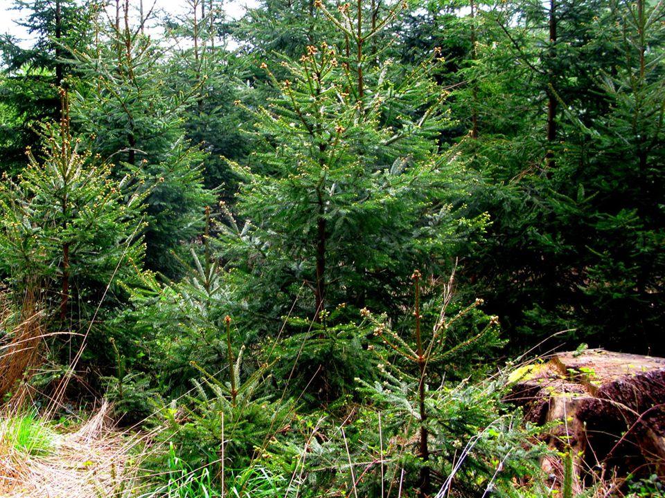 A jak prožívám jaro já??. Když to trochu jde, tak v lesíku, ale hlavně na mé zahradě a ve skleníku.