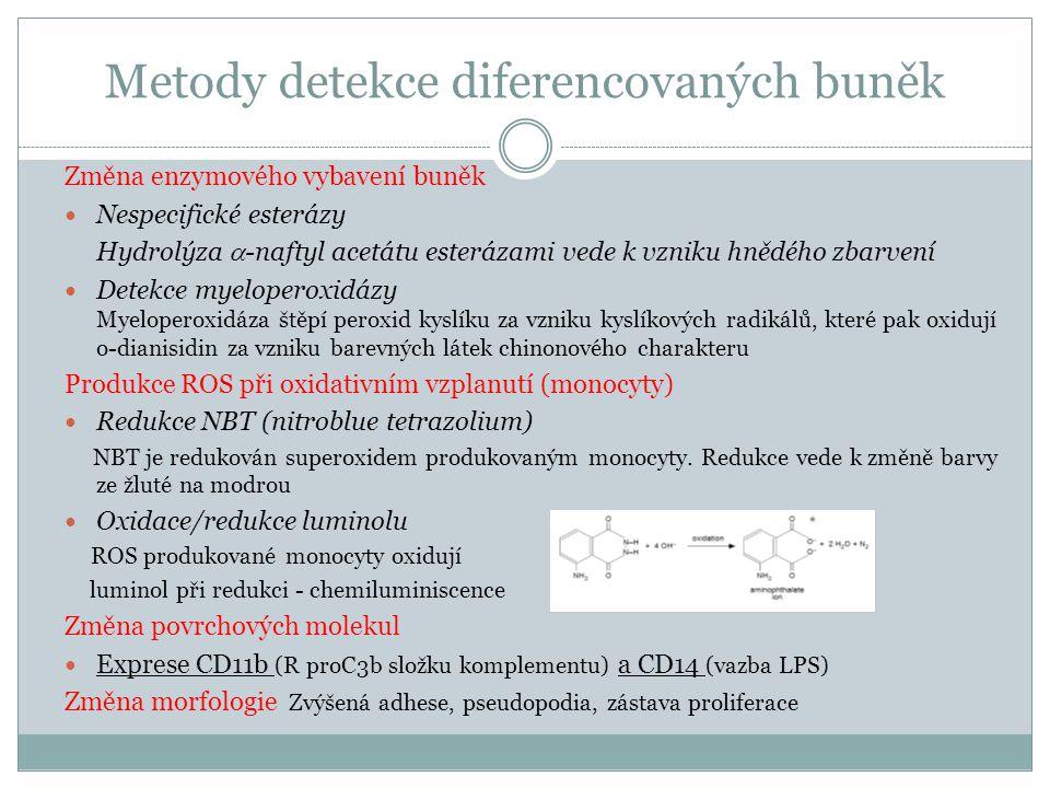 Metody detekce diferencovaných buněk Změna enzymového vybavení buněk Nespecifické esterázy Hydrolýza  -naftyl acetátu esterázami vede k vzniku hnědéh