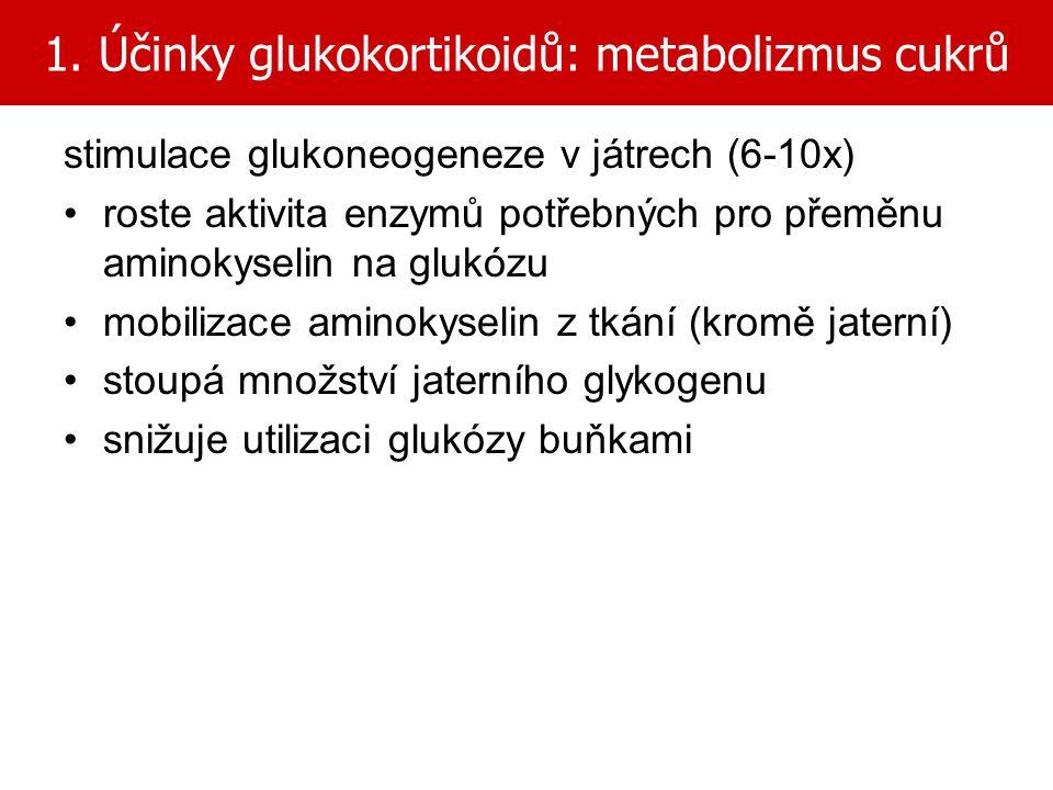 1. Účinky glukokortikoidů: metabolizmus cukrů stimulace glukoneogeneze v játrech (6-10x) roste aktivita enzymů potřebných pro přeměnu aminokyselin na