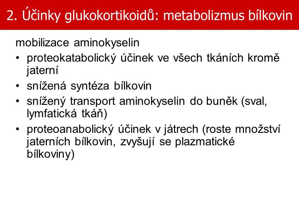 2. Účinky glukokortikoidů: metabolizmus bílkovin mobilizace aminokyselin proteokatabolický účinek ve všech tkáních kromě jaterní snížená syntéza bílko