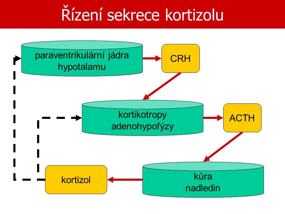Řízení sekrece kortizolu paraventrikulární jádra hypotalamu kortikotropy adenohypofýzy kůra nadledin CRH ACTH kortizol