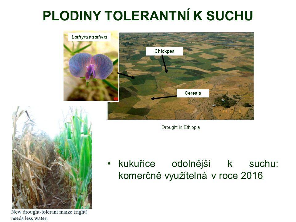 PLODINY TOLERANTNÍ K SUCHU kukuřice odolnější k suchu: komerčně využitelná v roce 2016 Lathyrus sativus Chickpea Cereals Drought in Ethiopia