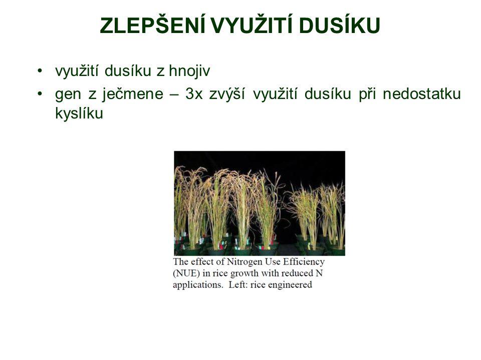 ZLEPŠENÍ VYUŽITÍ DUSÍKU využití dusíku z hnojiv gen z ječmene – 3x zvýší využití dusíku při nedostatku kyslíku