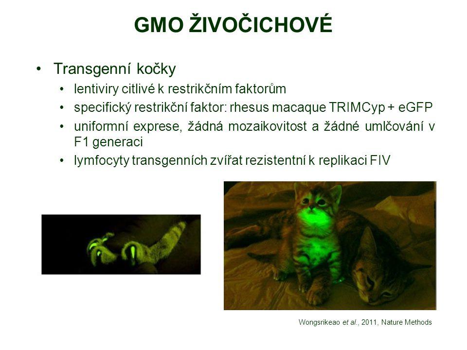GMO ŽIVOČICHOVÉ Transgenní kočky lentiviry citlivé k restrikčním faktorům specifický restrikční faktor: rhesus macaque TRIMCyp + eGFP uniformní expres