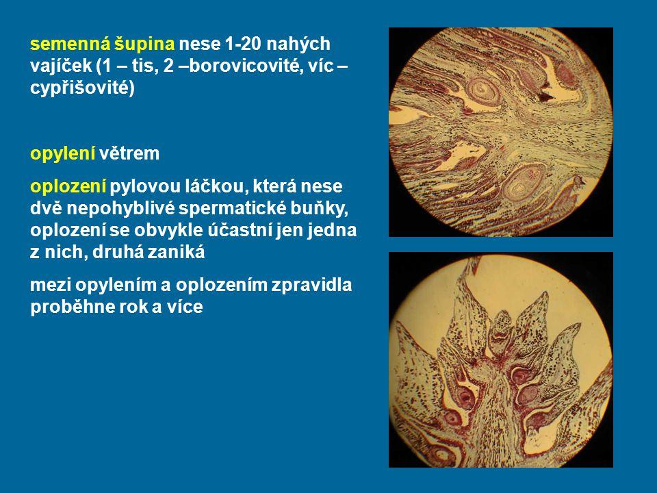 semenná šupina nese 1-20 nahých vajíček (1 – tis, 2 –borovicovité, víc – cypřišovité) opylení větrem oplození pylovou láčkou, která nese dvě nepohyblivé spermatické buňky, oplození se obvykle účastní jen jedna z nich, druhá zaniká mezi opylením a oplozením zpravidla proběhne rok a více