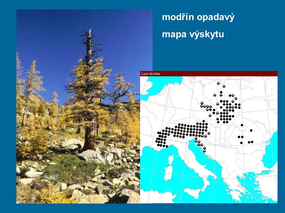 modřín opadavý mapa výskytu
