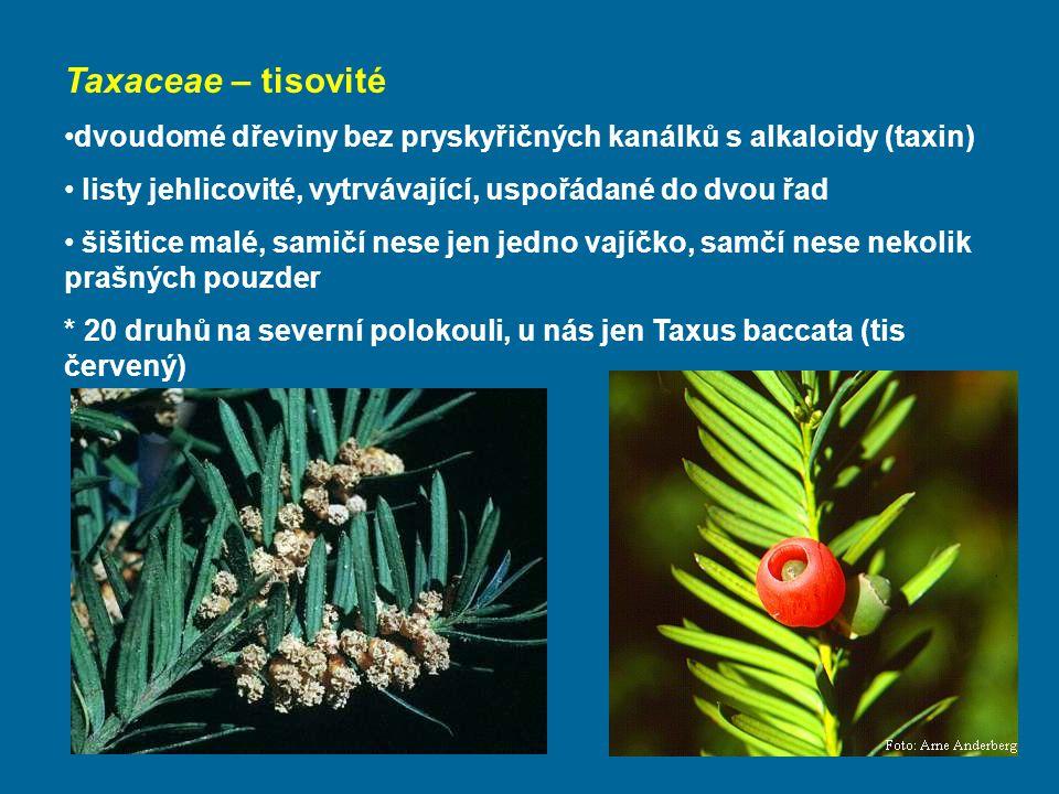 Taxaceae – tisovité dvoudomé dřeviny bez pryskyřičných kanálků s alkaloidy (taxin) listy jehlicovité, vytrvávající, uspořádané do dvou řad šišitice malé, samičí nese jen jedno vajíčko, samčí nese nekolik prašných pouzder * 20 druhů na severní polokouli, u nás jen Taxus baccata (tis červený)