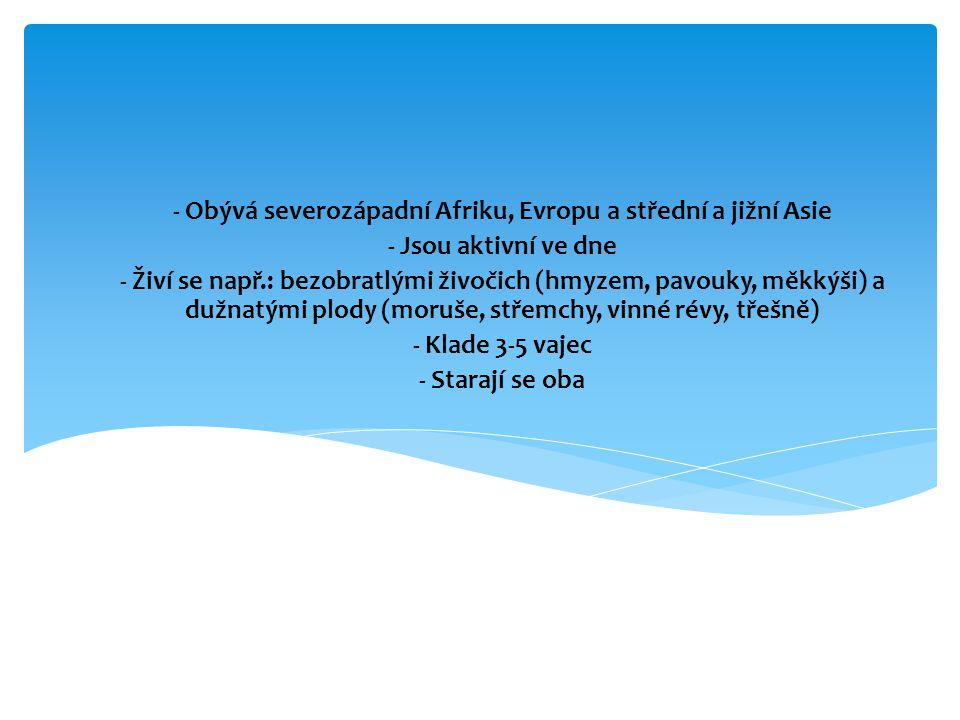 Žluva hajní (Oriolus oriolus)