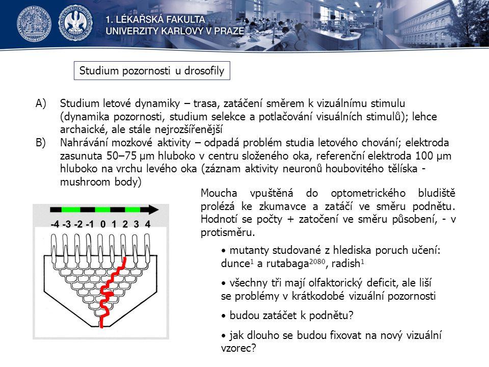 Studium pozornosti u drosofily A)Studium letové dynamiky – trasa, zatáčení směrem k vizuálnímu stimulu (dynamika pozornosti, studium selekce a potlačování visuálních stimulů); lehce archaické, ale stále nejrozšířenější B)Nahrávání mozkové aktivity – odpadá problém studia letového chování; elektroda zasunuta 50–75 μm hluboko v centru složeného oka, referenční elektroda 100 μm hluboko na vrchu levého oka (záznam aktivity neuronů houbovitého tělíska - mushroom body) Moucha vpuštěná do optometrického bludiště prolézá ke zkumavce a zatáčí ve směru podnětu.