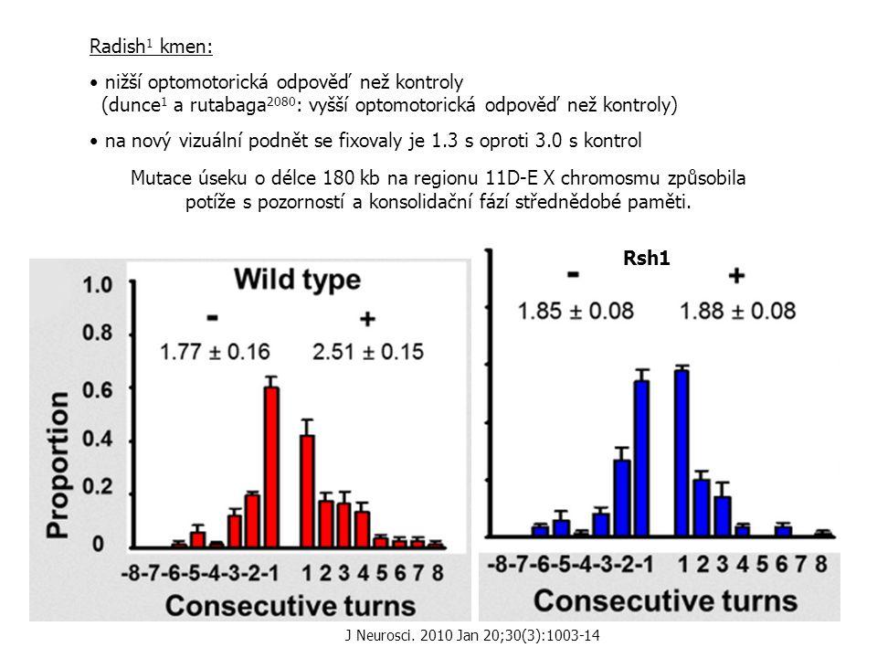 Rsh1 Radish 1 kmen: nižší optomotorická odpověď než kontroly (dunce 1 a rutabaga 2080 : vyšší optomotorická odpověď než kontroly) na nový vizuální podnět se fixovaly je 1.3 s oproti 3.0 s kontrol Mutace úseku o délce 180 kb na regionu 11D-E X chromosmu způsobila potíže s pozorností a konsolidační fází střednědobé paměti.
