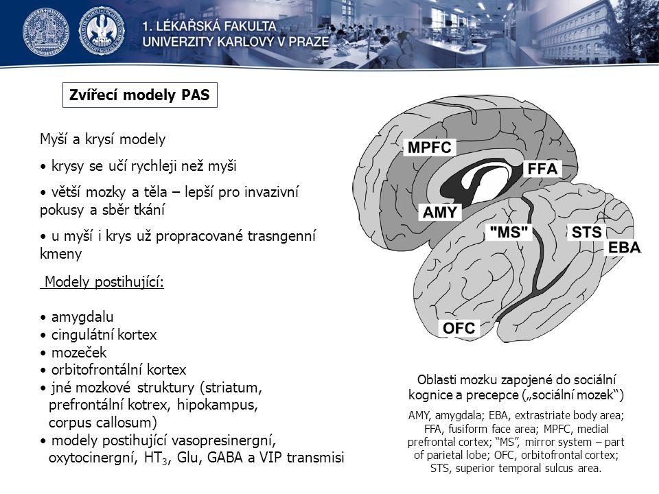 """Zvířecí modely PAS Myší a krysí modely krysy se učí rychleji než myši větší mozky a těla – lepší pro invazivní pokusy a sběr tkání u myší i krys už propracované trasngenní kmeny Oblasti mozku zapojené do sociální kognice a precepce (""""sociální mozek ) AMY, amygdala; EBA, extrastriate body area; FFA, fusiform face area; MPFC, medial prefrontal cortex; MS , mirror system – part of parietal lobe; OFC, orbitofrontal cortex; STS, superior temporal sulcus area."""