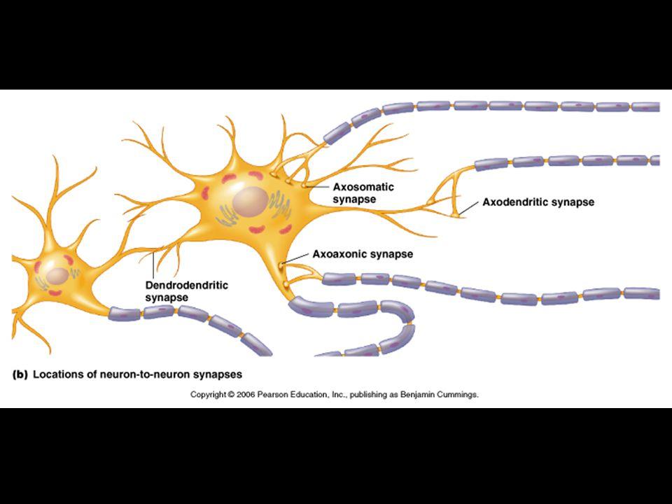 neuroplasticita
