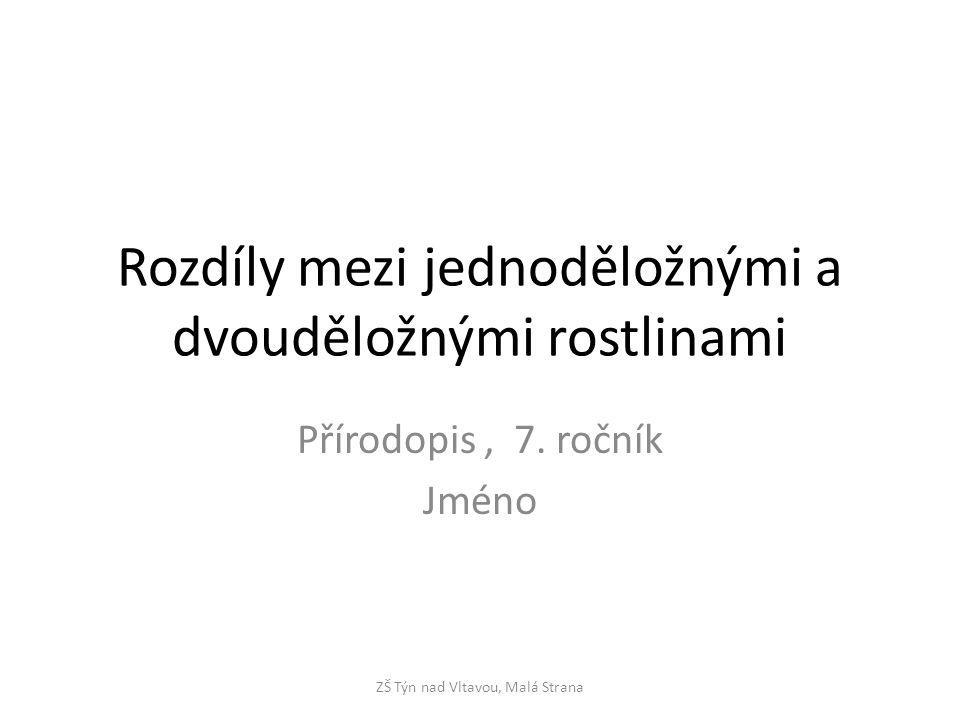 Rozdíly mezi jednoděložnými a dvouděložnými rostlinami Přírodopis, 7.