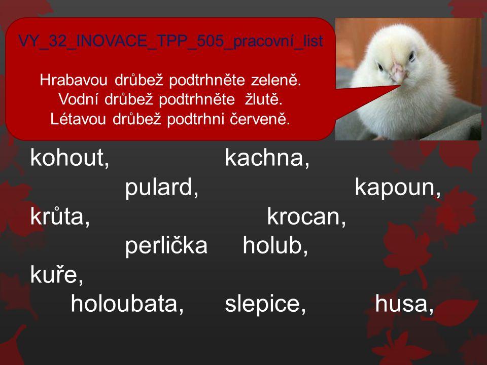 kohout, kachna pulard, kapoun, krůta, krocan, perlička, kuře, holub, holoubata, slepice, husa, VY_32_INOVACE_TPP_505_pracovní_list_řešení