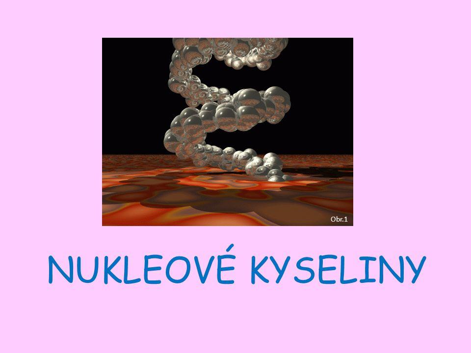 NUKLEOVÉ KYSELINY Obr.1