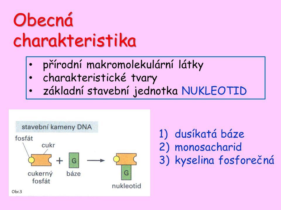 Obecná charakteristika přírodní makromolekulární látky charakteristické tvary základní stavební jednotka NUKLEOTID 1)dusíkatá báze 2)monosacharid 3)ky