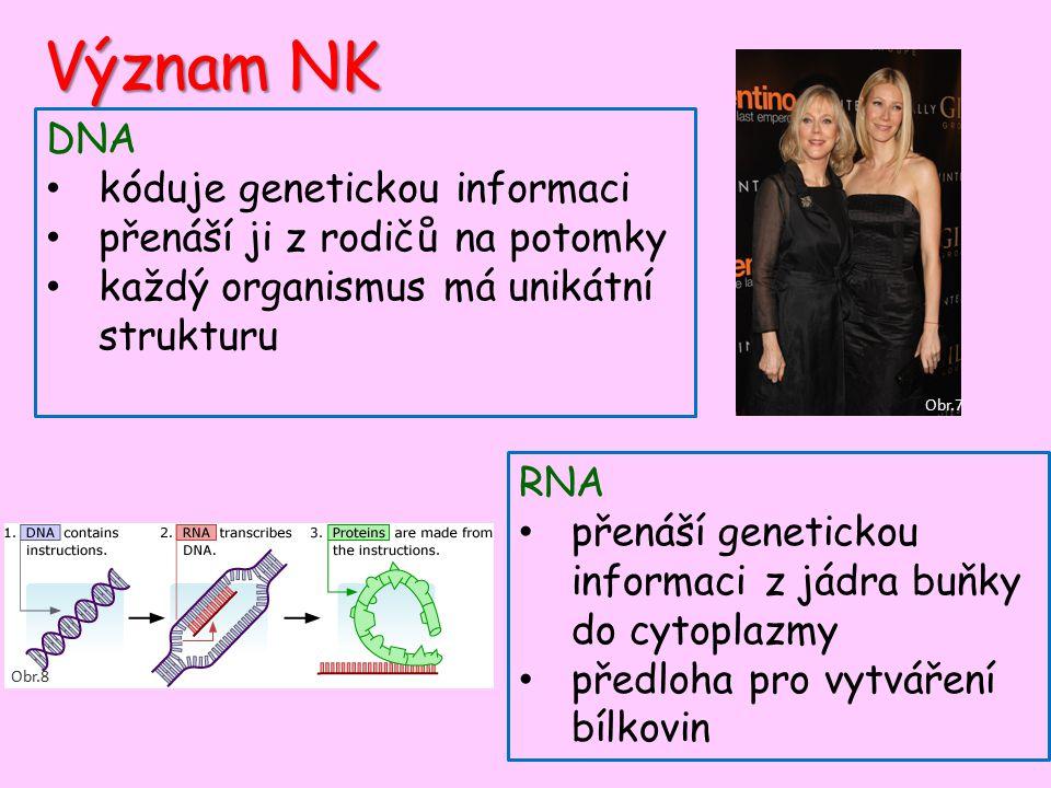 Význam NK DNA kóduje genetickou informaci přenáší ji z rodičů na potomky každý organismus má unikátní strukturu RNA přenáší genetickou informaci z jádra buňky do cytoplazmy předloha pro vytváření bílkovin Obr.7 Obr.8