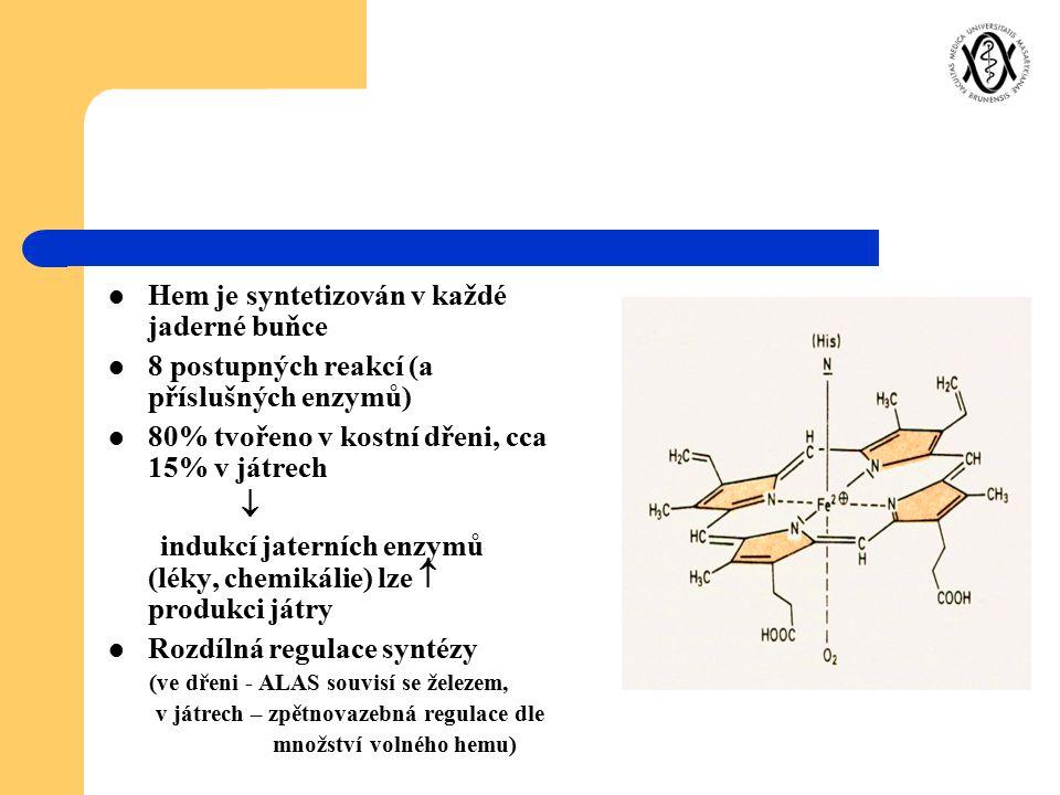 Hem je syntetizován v každé jaderné buňce 8 postupných reakcí (a příslušných enzymů) 80% tvořeno v kostní dřeni, cca 15% v játrech  indukcí jaterních