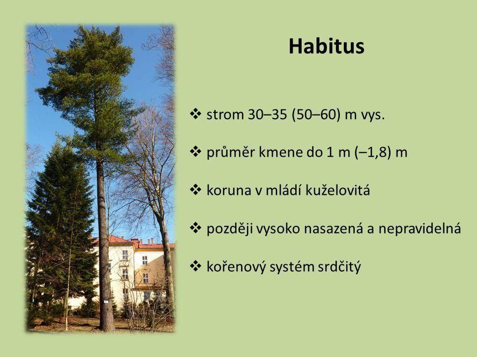 Habitus  strom 30–35 (50–60) m vys.  průměr kmene do 1 m (–1,8) m  koruna v mládí kuželovitá  později vysoko nasazená a nepravidelná  kořenový sy